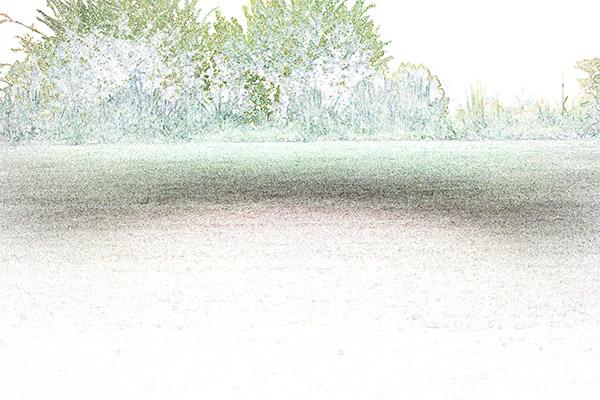 grassfocus1