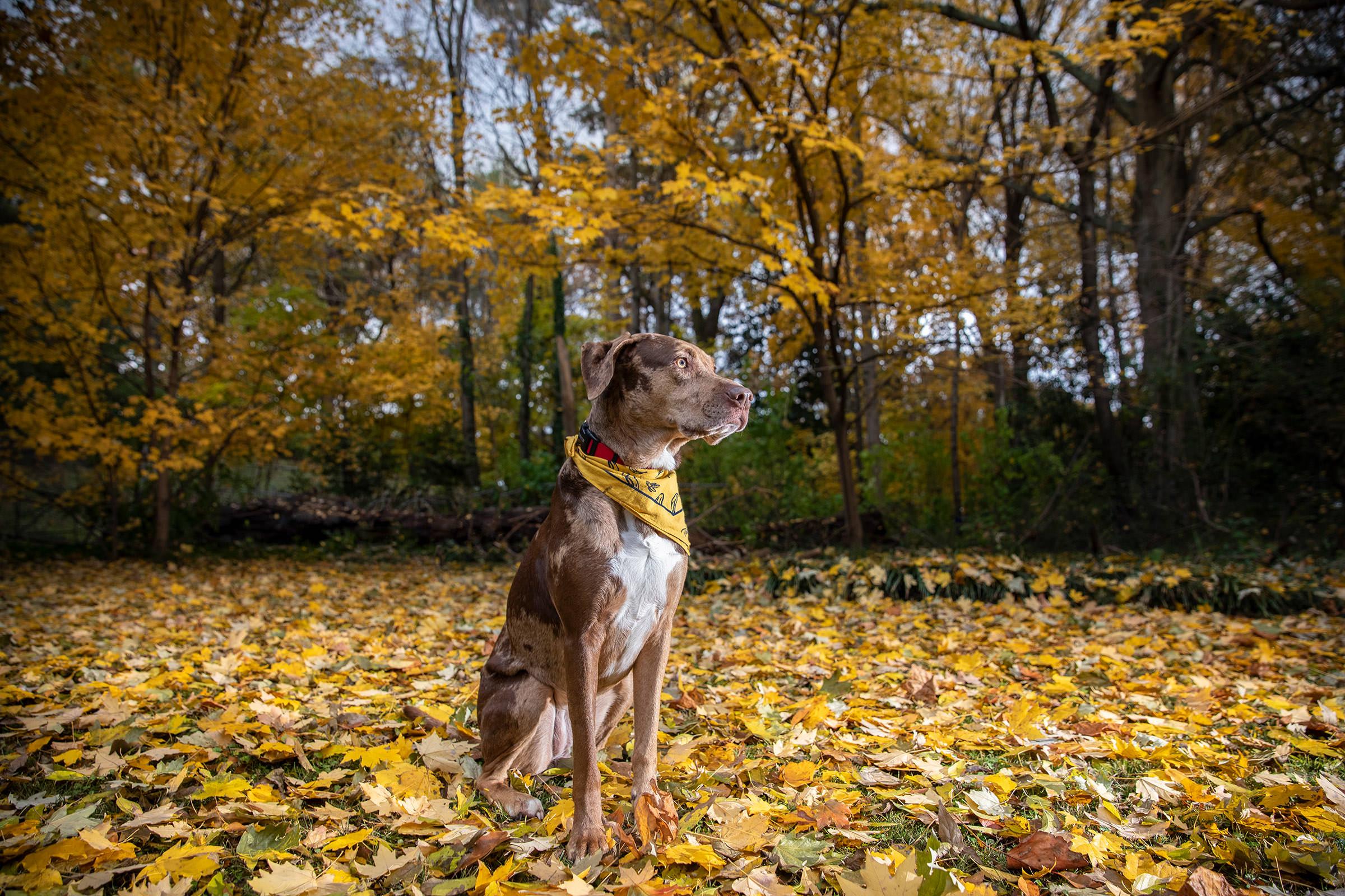 Pet Photography Tutorial